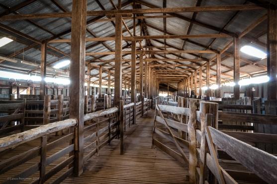 Yanga Wool-shed
