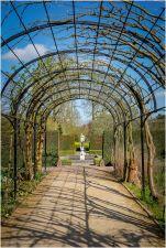 In the Queen's Garden
